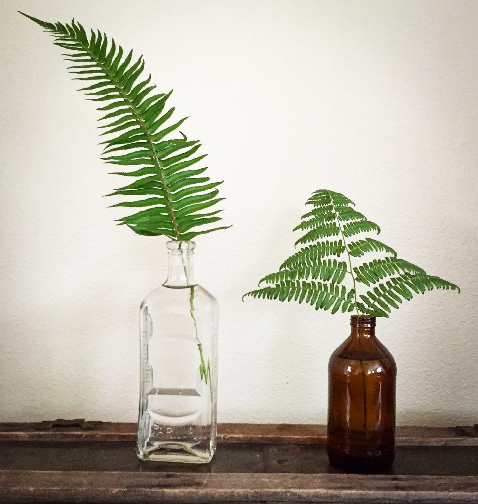 fern leaves in vintage bottles